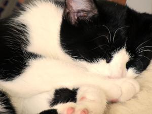 Molly sover