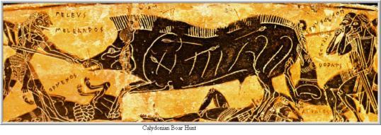 Calydonian Boar.newnew