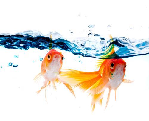 goldfisch-gartenteich