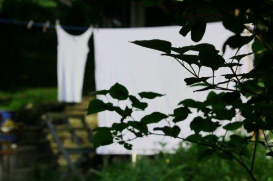 tvätt och björkbild 024