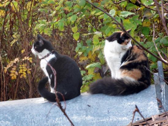 Molly och Mimmi