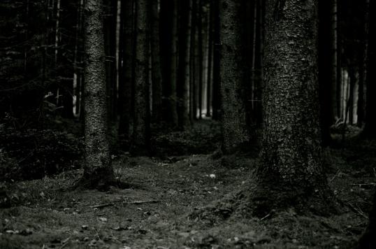 dunkler-Wald-a25050020