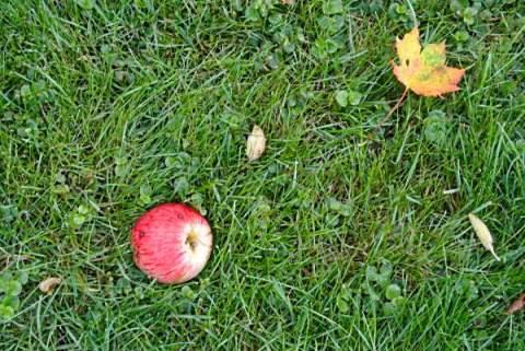 äpplen och hos Christel 009