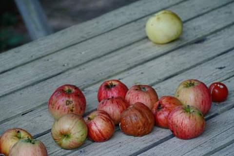 äpplen och hos Christel 031