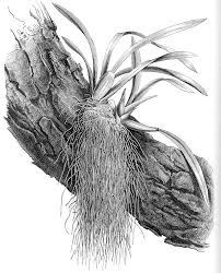 luftrötter10