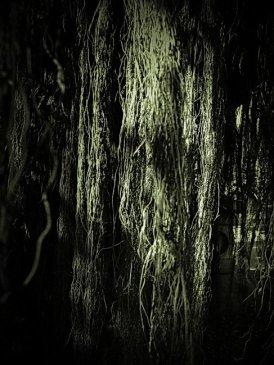 2009-02-14  «C¬z®ú,¥x¿}¶éÃÀ¶é°Ï