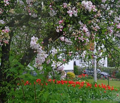 Lena trädgård 030