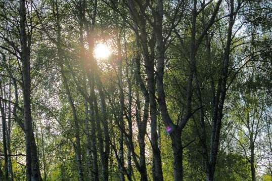 treblad, promenad 072