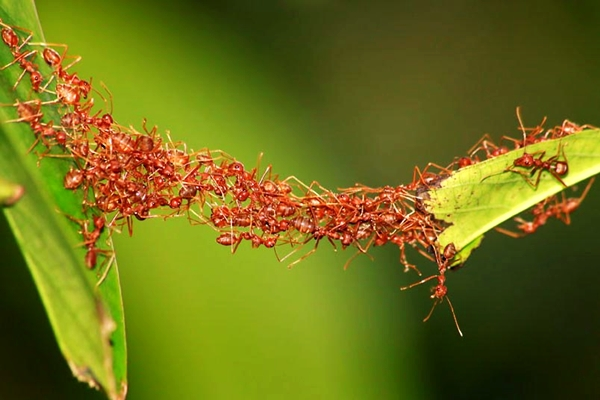 ant-bridge_2302146k